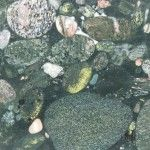 Green-Marinace-Granite.jpg